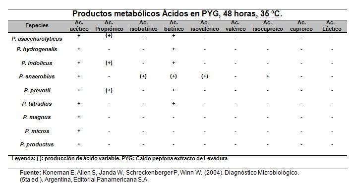 Peptostreptococos: características, morfologia, sintomas 3