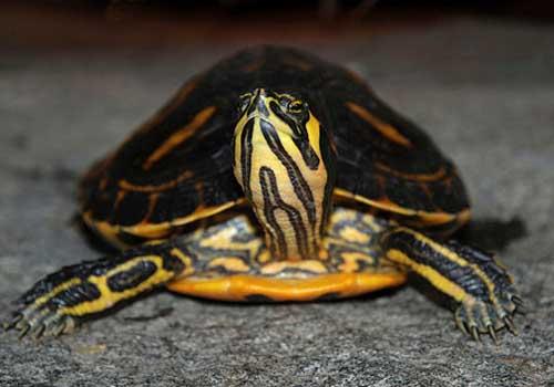 20 animais em extinção na Venezuela 18