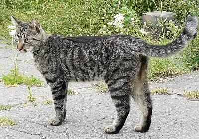 Toxascaris leonina: características, morfologia, sintomas de infecção 1