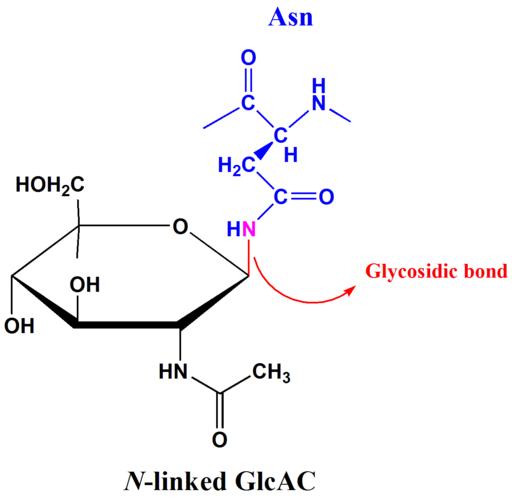 Ligação glicosídica: características, tipos e nomenclatura 3