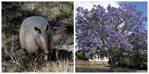 Flora e fauna de Tucumán: espécies representativas 1
