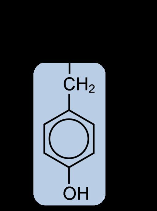 Catecolaminas: síntese, liberação e funções 2