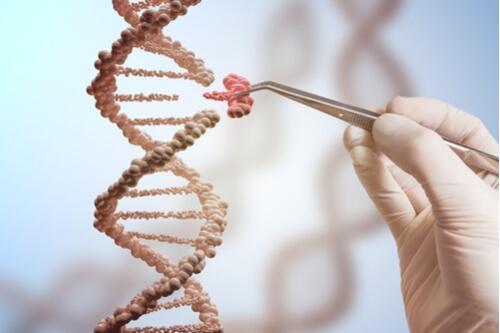 Que importância as mutações têm para os seres vivos? 1
