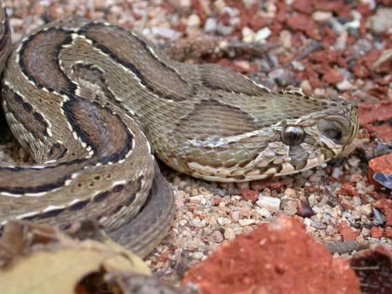 Parque Nacional de Komodo: História, Localização, Flora, Fauna 6