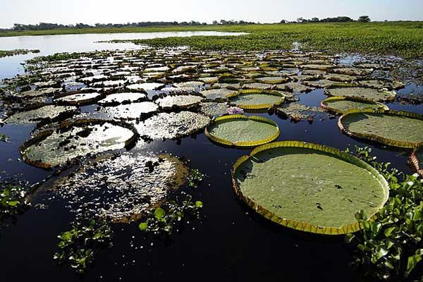 Pantanal: características, relevo, flora, clima, fauna, exemplos 4