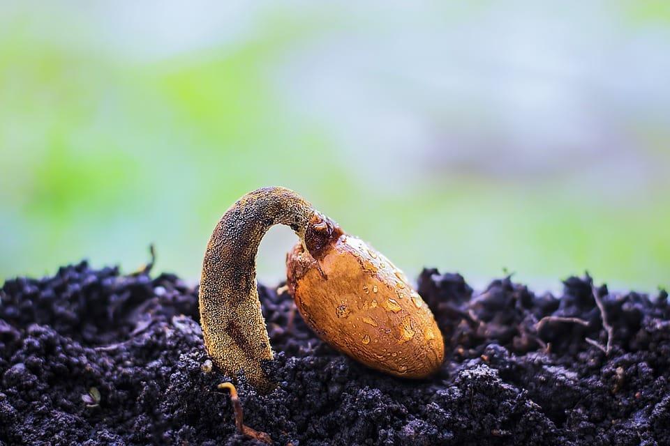 Fotoperíodo: em plantas e animais 1