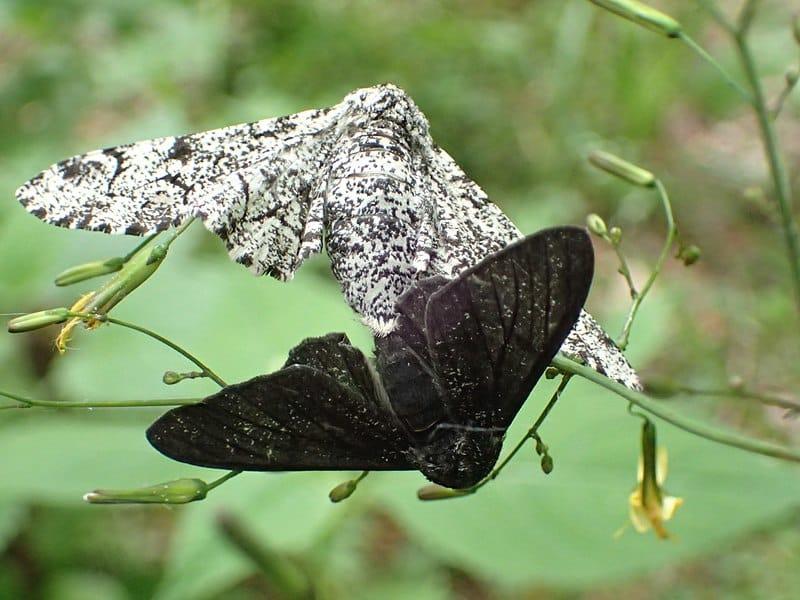 Microevolução: características e exemplos 1