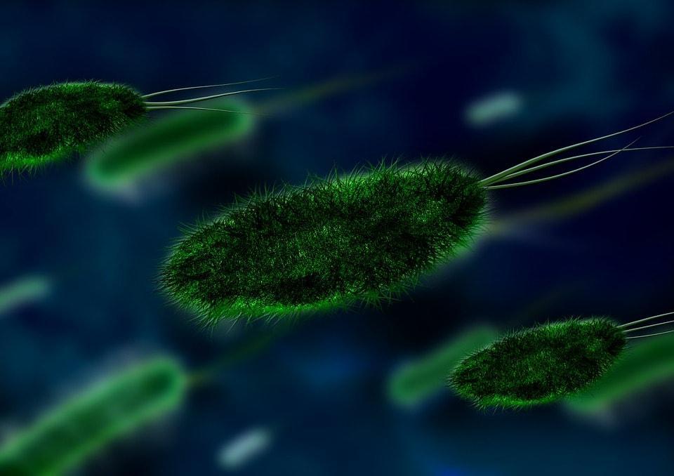 RNA polimerase: estrutura, funções, procariotos, eucariotos 1