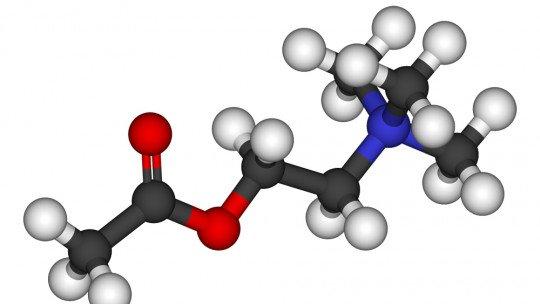 Acetilcolina (neurotransmissor): funções e características 1