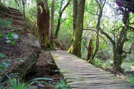 9 Palavras relacionadas à atividade florestal 1