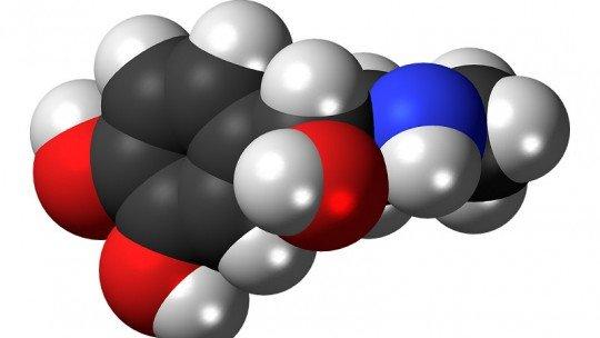Adrenalina, o hormônio que nos ativa 1
