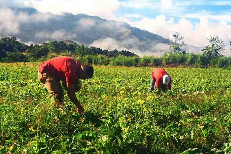 10 Problemas ambientais do Peru e suas características 6