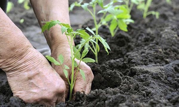 Deterioração ambiental: causas, consequências e soluções 3