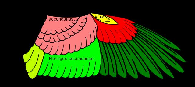 Aves: características, tipos, sistemas, reprodução 3