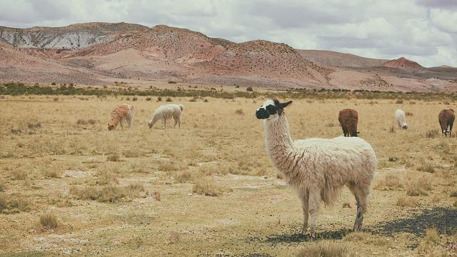 Os 25 animais nativos mais comuns do Peru