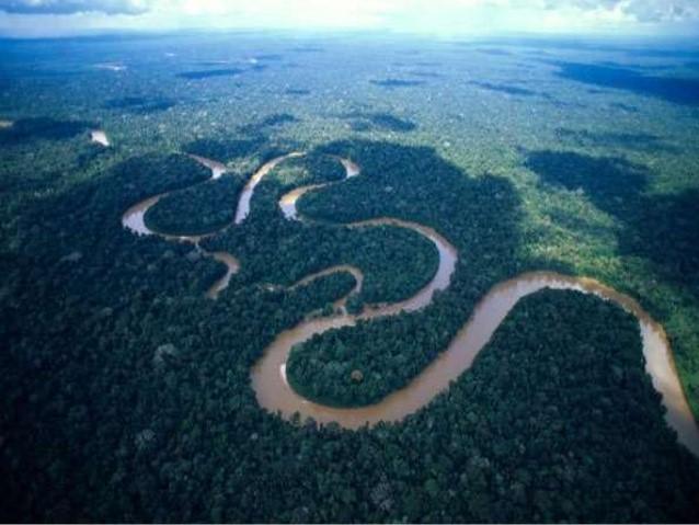 Planície Amazônica: Tipos, Recursos Naturais e Economia 1