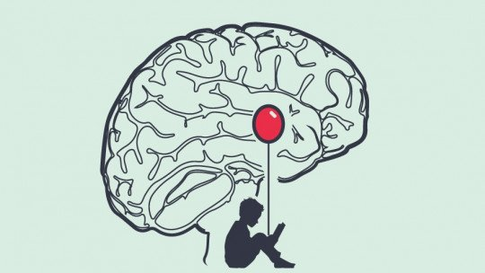 Amígdala cerebral: estrutura e funções 1