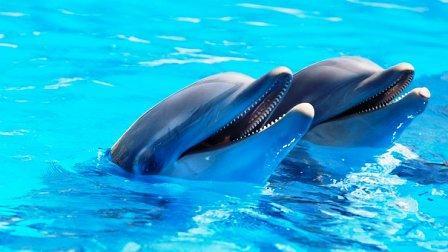 100 fatos curiosos sobre os animais que o surpreenderão 4