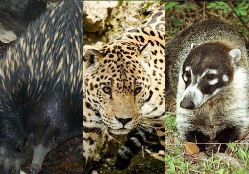 Fauna de clima tropical: 25 animais característicos 3