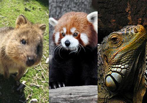 Fauna de clima tropical: 25 animais característicos 4
