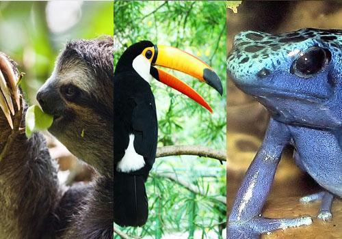 Fauna de clima tropical: 25 animais característicos 1