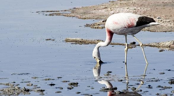 40 animais em perigo de extinção na Argentina 10