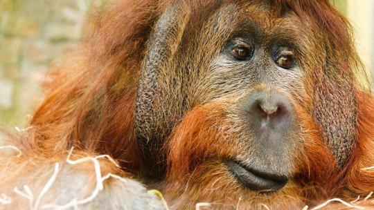 Os 20 animais mais ameaçados do mundo 1