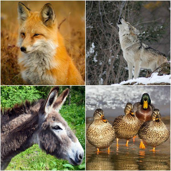 Homeotérmicos (animais): características e exemplos 1