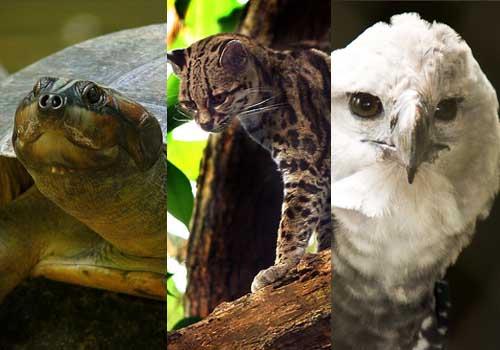 20 animais em extinção na Venezuela 1