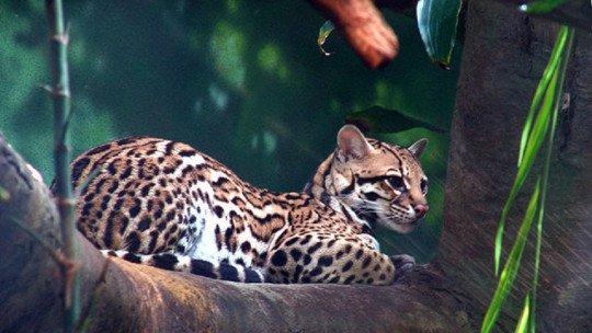 16 animais em risco de extinção no México 1