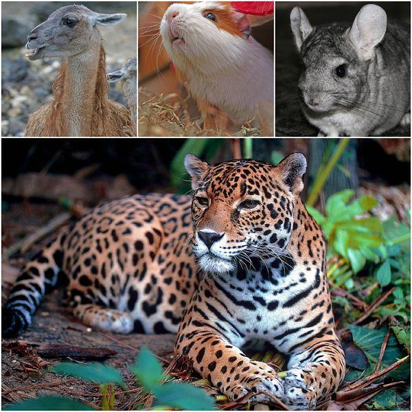 20 Animais da Serra do Peru 7