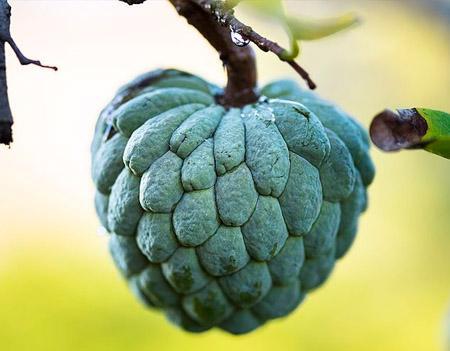 20 frutas em Kaqchikel (com pronúncia) 1