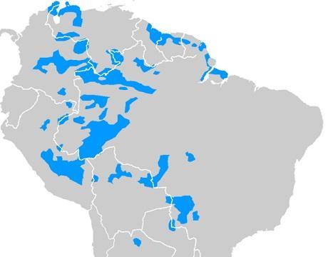As 8 famílias de idiomas mais importantes da Colômbia 2