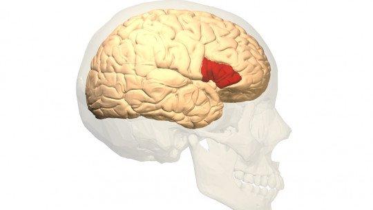Área de Broca (parte do cérebro): funções e sua relação com a linguagem 1
