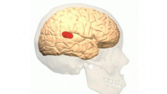 Área de Wernicke: anatomia, funções e distúrbios 1