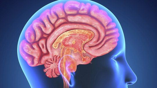As 5 áreas auditivas do cérebro 1