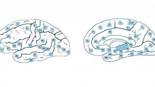 As 47 áreas de Brodmann e as regiões do cérebro que contêm 1