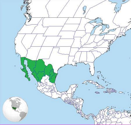 Aridoamérica: Características, Clima, Flora e Fauna 1