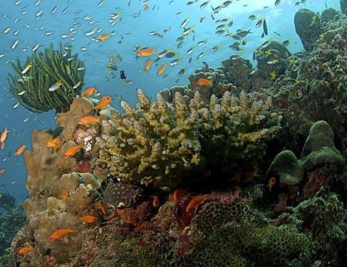 Oceanografia: história, campo de estudo, ramos e pesquisa 5