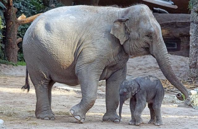 Animais quadrúpedes: características e exemplos 3