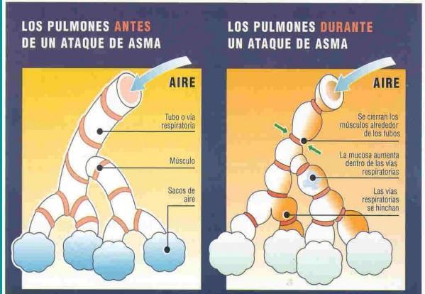 Sistema respiratório: funções, partes, funcionamento 8
