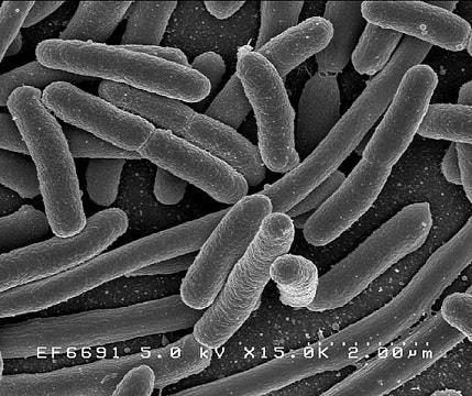 10 Doenças causadas por bactérias 1