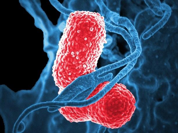 Pneumatocele: sintomas, causas e tratamentos 2