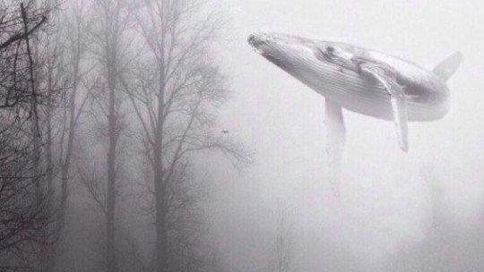 """Um jogo macabro russo, """"Blue Whale"""", levou ao suicídio de 130 jovens 1"""