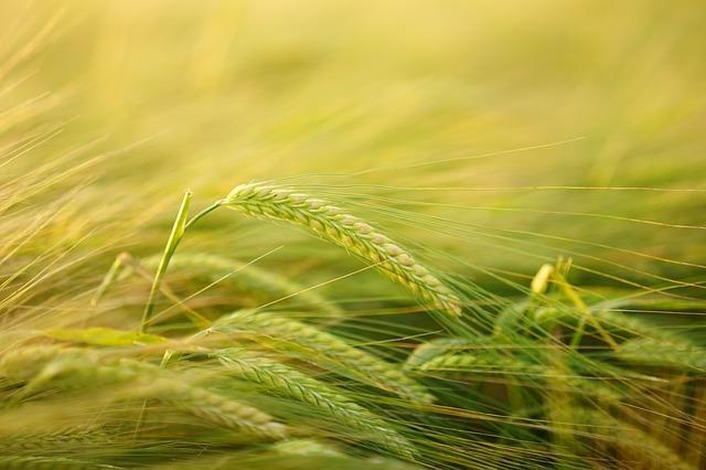 20 Alimentos à base de plantas e suas características 14