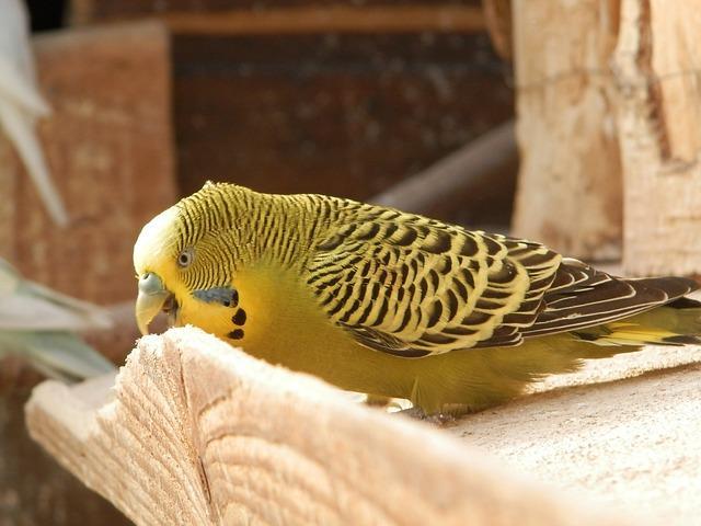Animais aéreos: características e exemplos 2