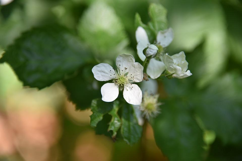 Auto-fertilização: em animais, em plantas e exemplos 1