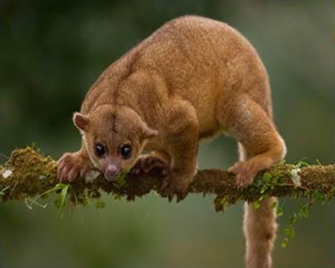 Floresta andina: características, localização, flora, fauna e clima 4