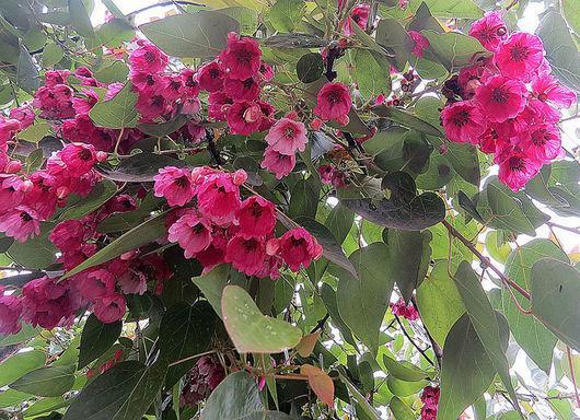 Floresta andina: características, localização, flora, fauna e clima 3