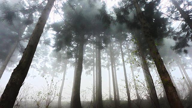 Cedros: características, habitat, espécies, usos e doenças 1